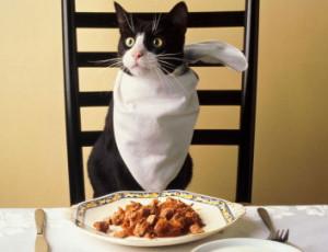 Правильное кормление животных