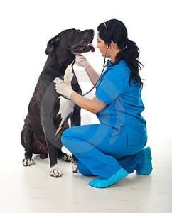 Не пренебрегайте плановыми ветеринарными обработками