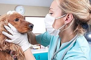 Когда обращаться к ветеринарному врачу?