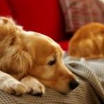 Ветеринарная диета для кошек и собак при диабете